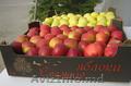 Яблоки айдаред,  семеринка,  голден мелроуз